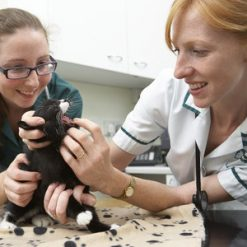 veterinary support assistant level 3